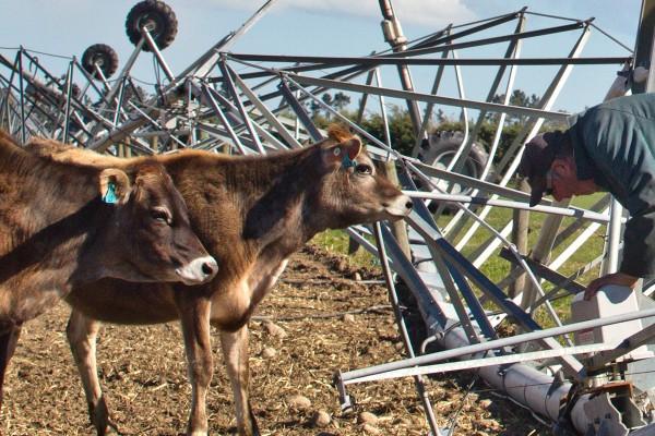 Wind damage on Canterbury farms