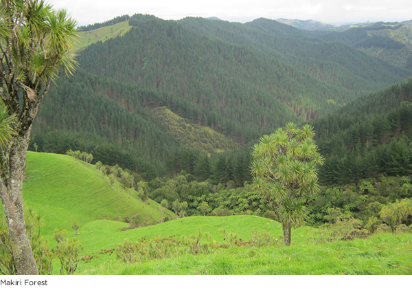 Criagmore's Makiri Forest
