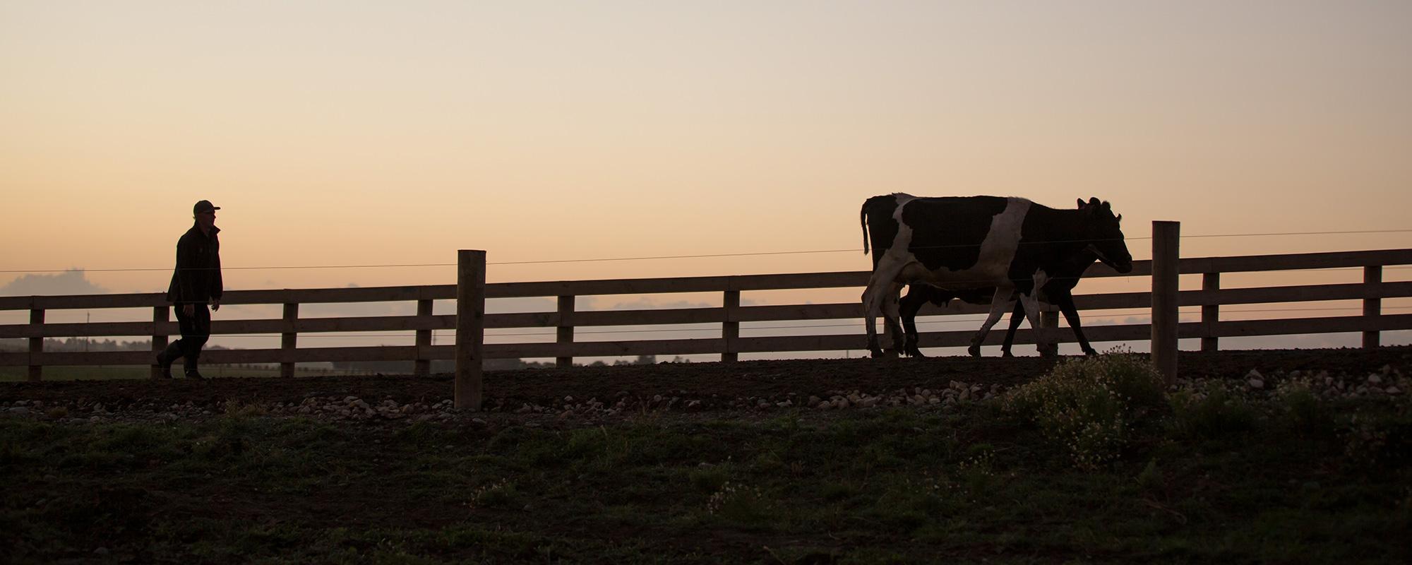 The global farmland story