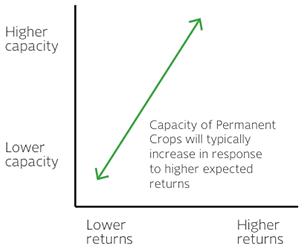Permanent Crop Capacity Response to Returns