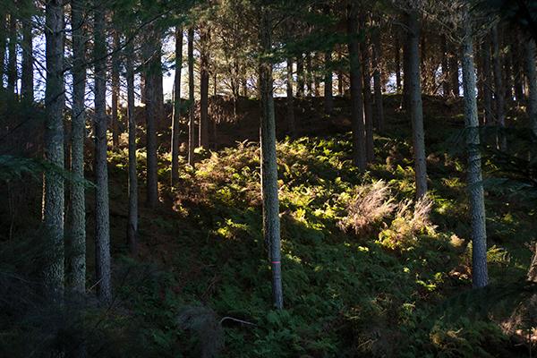 Waihora forest